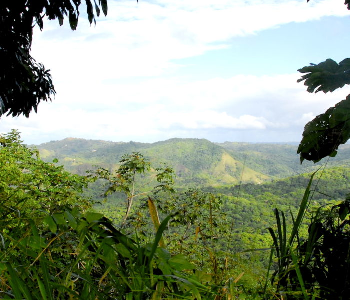 Land Ahead! Puerto Rico and My Great Expectations